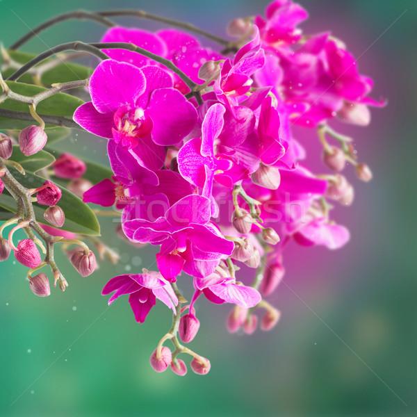 Stok fotoğraf: Mor · orkide · şube · yeşil · bokeh · doğa
