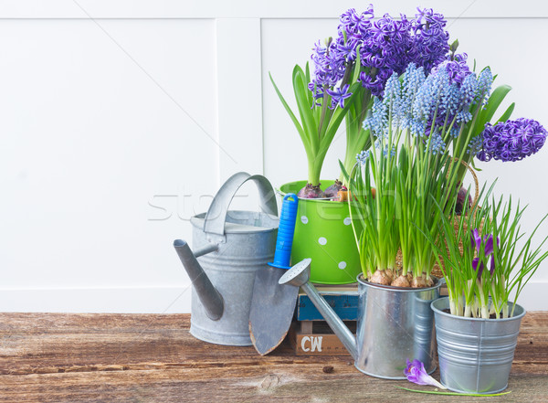 Gardening tools and flowers Stock photo © neirfy