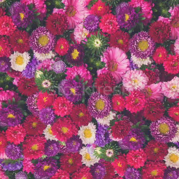 aster flowers background Stock photo © neirfy