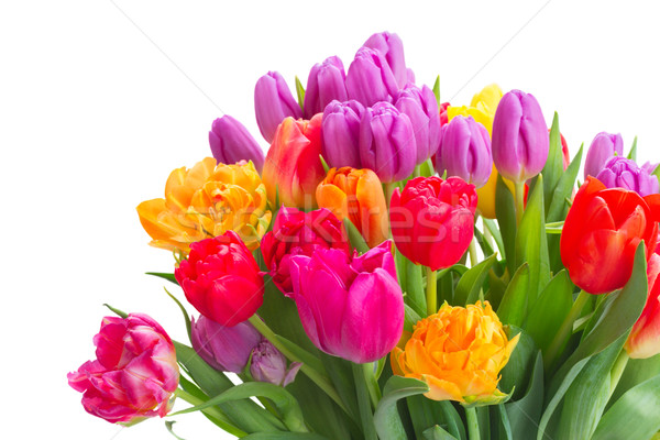 bouquet of bright spring tulips Stock photo © neirfy