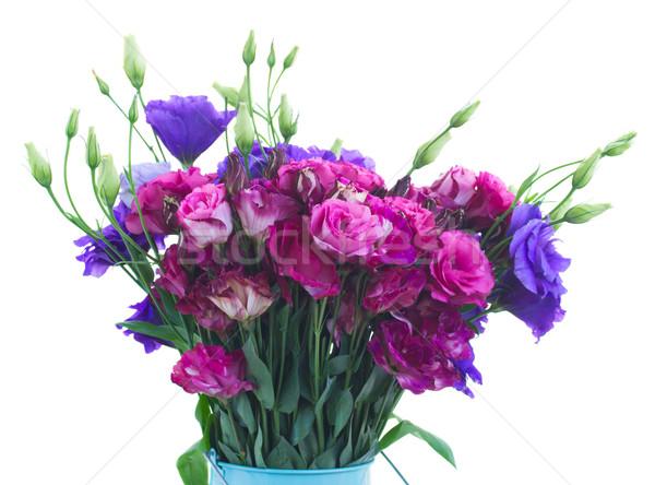 Mor leylak rengi çiçekler yalıtılmış Stok fotoğraf © neirfy