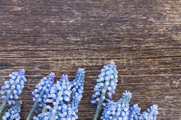Stok fotoğraf: çiçekler · tablo · taze · mavi · ahşap · masa · bo