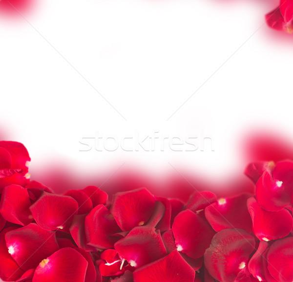Frame donkere Rood rose bloemblaadjes natuurlijke geïsoleerd Stockfoto © neirfy