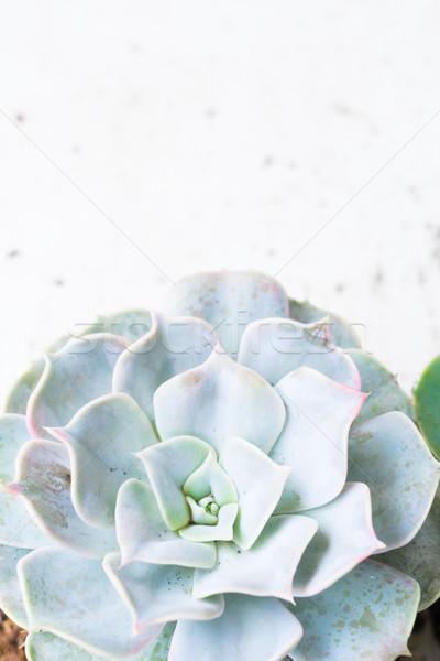 Nedvdús növekvő növények zöld friss közelkép Stock fotó © neirfy