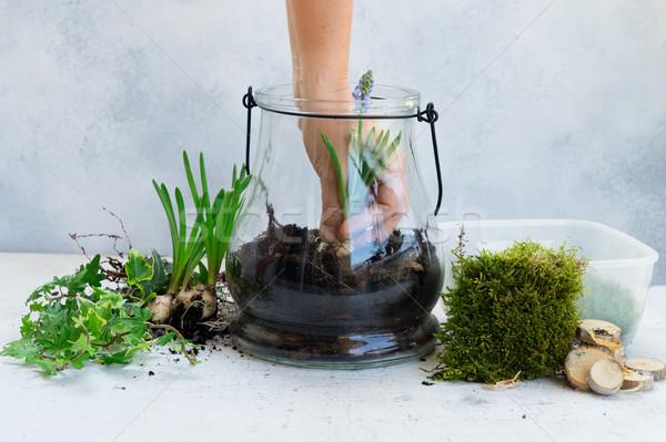 Ogród wewnątrz mason jar szkła roślin Zdjęcia stock © neirfy