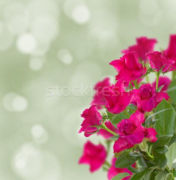 Buket leylak rengi güller yeşil bokeh çiçekler Stok fotoğraf © neirfy