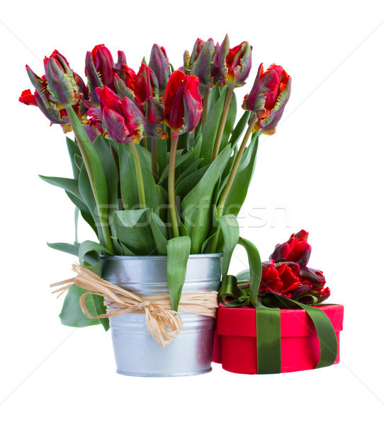 spring tulip flowers in pot with present Stock photo © neirfy