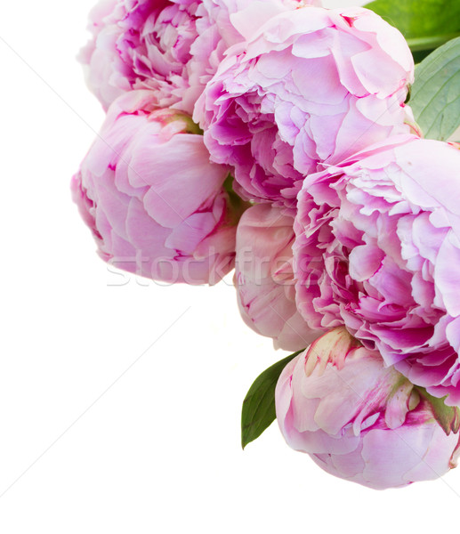 border of pink peonies Stock photo © neirfy