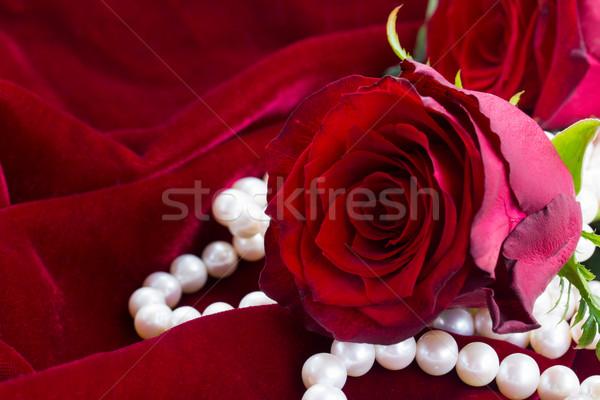 Kırmızı gül kadife bir taze kırmızı gül inciler Stok fotoğraf © neirfy