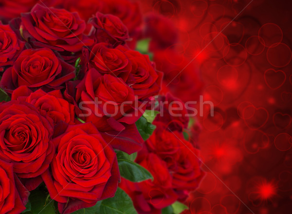 scarlet roses  on dark background Stock photo © neirfy