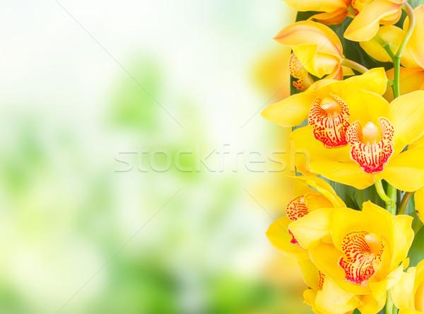Giallo orchidea fiori confine copia spazio verde Foto d'archivio © neirfy