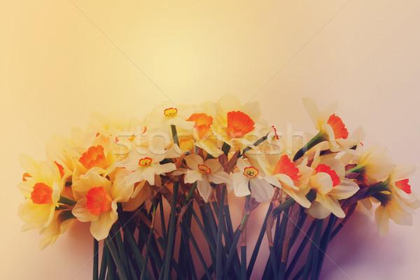 свежие весны нарциссов свет темно желтый Сток-фото © neirfy