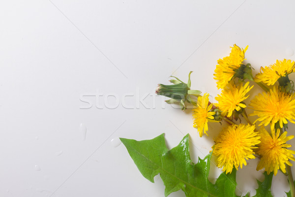 Stock photo: Dandelions flat lay scene