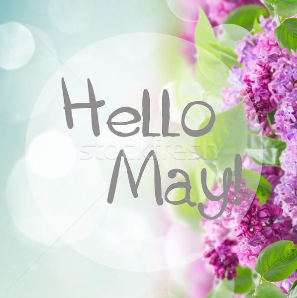 Bush of Lilac Stock photo © neirfy