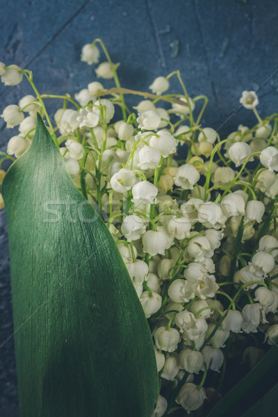 Stock photo: Lilly of the valley flowers