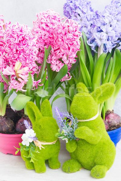 Jardinagem jacinto fresco flores decorações rosa Foto stock © neirfy