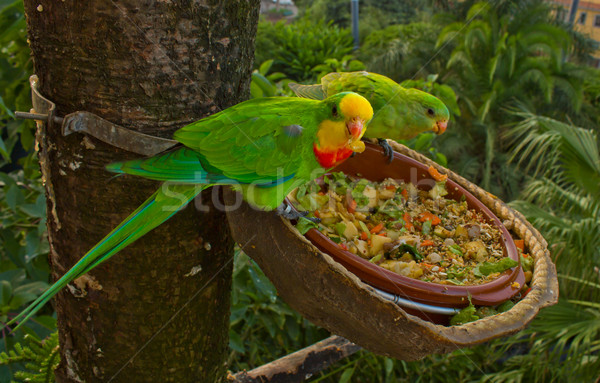 lori parrot Stock photo © neirfy