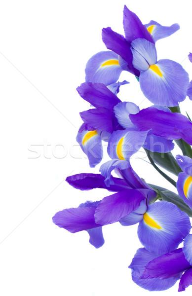 bouquet of blue  irises Stock photo © neirfy