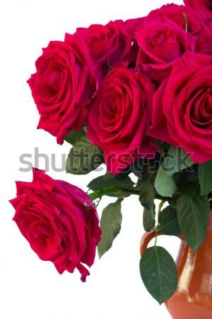 Mályvaszínű rózsák keret izolált fehér esküvő Stock fotó © neirfy