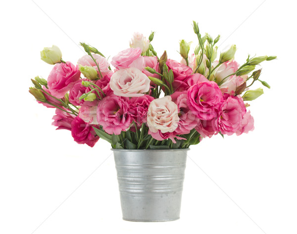 Pink eustoma flowers in metal pot Stock photo © neirfy