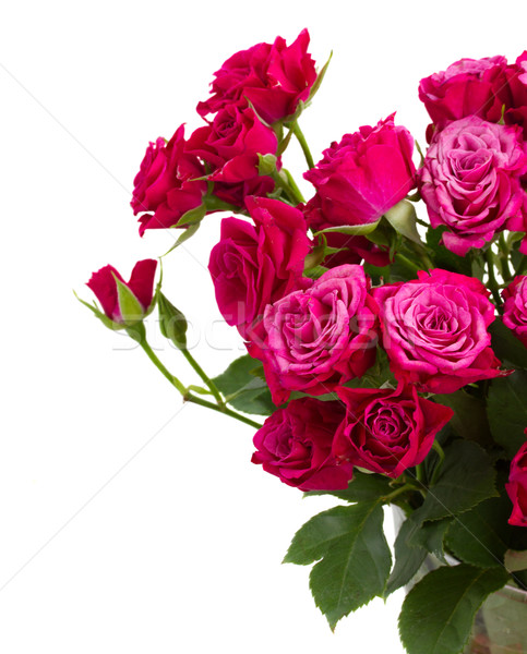 Köteg friss mályvaszínű rózsák közelkép izolált Stock fotó © neirfy