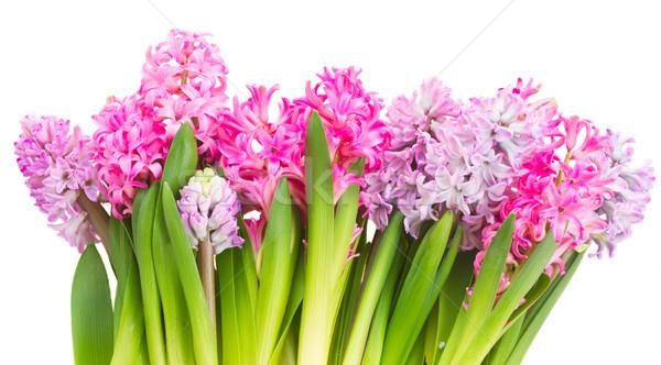 Rosa violeta flores fronteira isolado branco Foto stock © neirfy