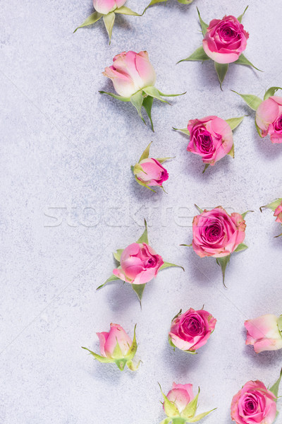 Pink and white rose flowers Stock photo © neirfy