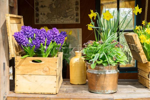 Spring flowers scenery Stock photo © neirfy