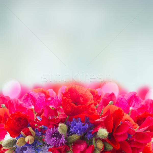 罌粟 甜 玉米 花卉 邊境 藍色 商業照片 © neirfy