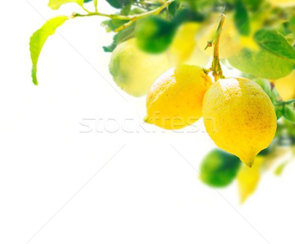 Lemon garden with friuts Stock photo © neirfy