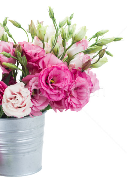 Pink eustoma flowers in metal pot close up Stock photo © neirfy