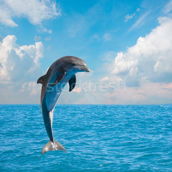 Een springen dolfijnen zeegezicht diep oceaan Stockfoto © neirfy
