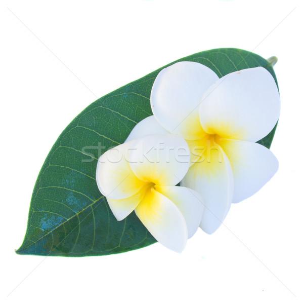 frangipani flowers Stock photo © neirfy