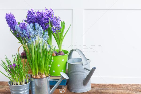Stock fotó: Kerti · eszközök · virágok · copy · space · fehér · virág · munka
