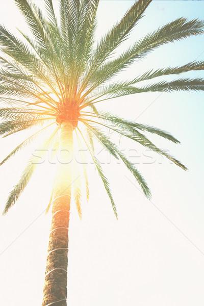 palm tree  and sunshine Stock photo © neirfy