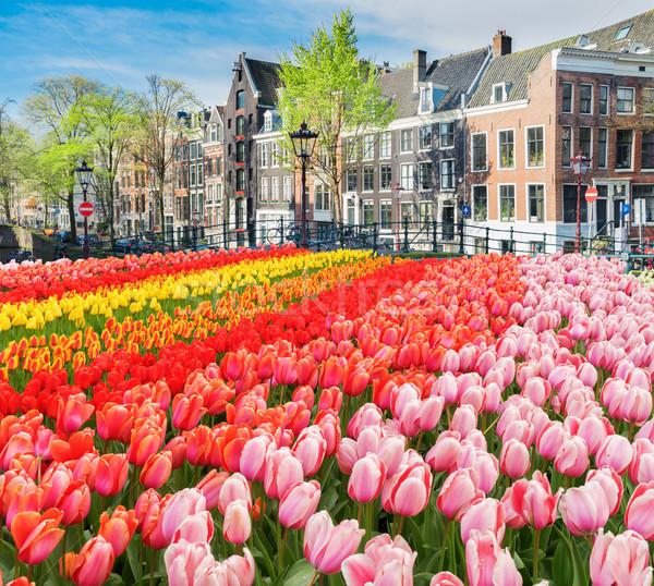 Evler Amsterdam Hollanda hollanda taze büyüyen Stok fotoğraf © neirfy
