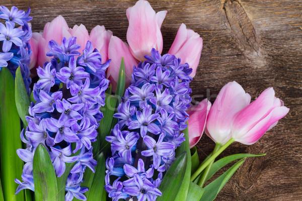 Tulipas rosa azul flores escuro Foto stock © neirfy
