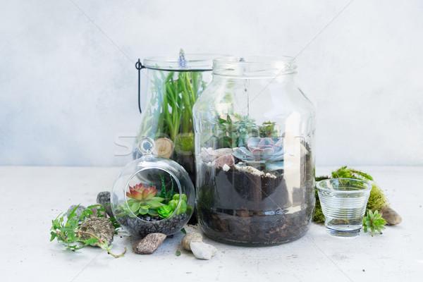 Kert bent kőműves bögre növények fény Stock fotó © neirfy