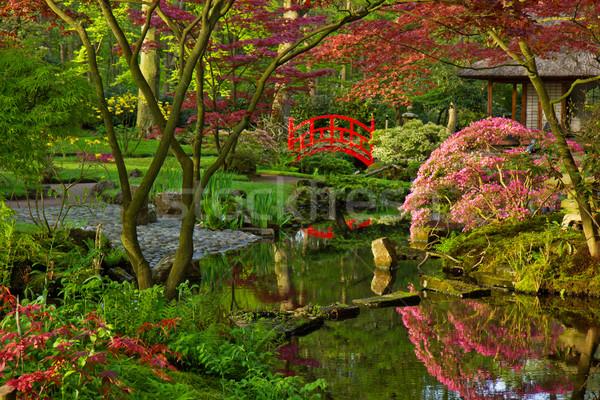 Japanese garden in spring Stock photo © neirfy