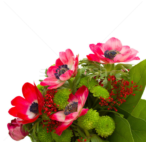 букет красный зеленый цветы изолированный белый Сток-фото © neirfy