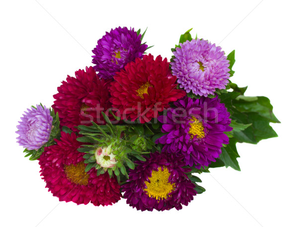 bouquet of red and violet  aster flowers Stock photo © neirfy