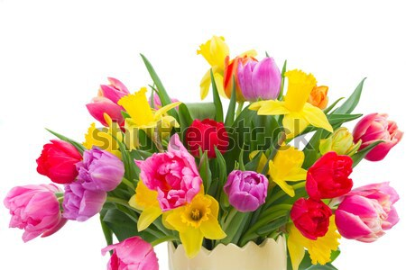 freesia and daffodil  flowers Stock photo © neirfy