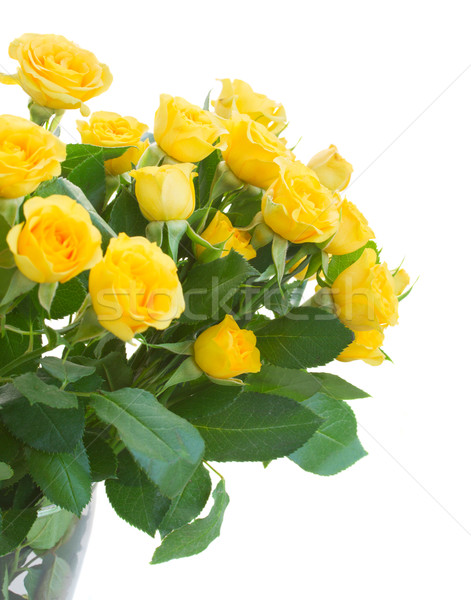 Ramo frescos rosas amarillo Foto stock © neirfy