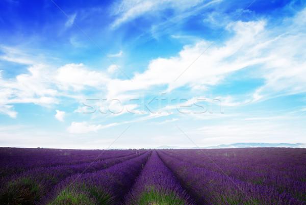 Lawendowe pole Błękitne niebo lata chmury Francja retro Zdjęcia stock © neirfy