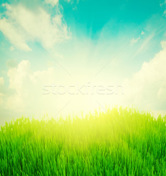 rising sun and green grass under blue sky Stock photo © neirfy