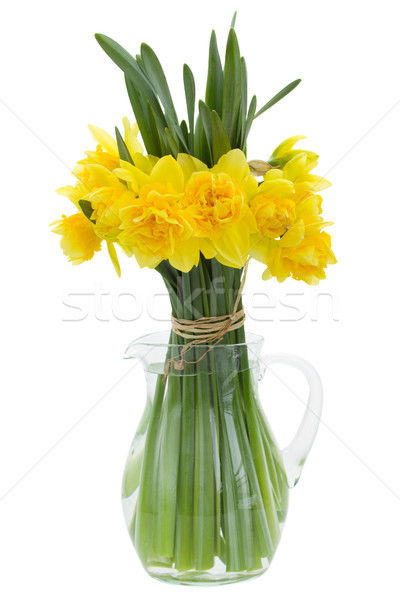 букет нарциссов ваза изолированный белый фон Сток-фото © neirfy