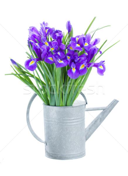 青 花 じょうろ 孤立した 白 花 ストックフォト © neirfy