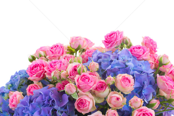 border of pink roses and blue hortensia flowers close up Stock photo © neirfy
