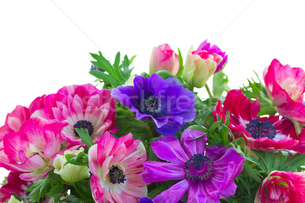 border of anemone flowers  Stock photo © neirfy