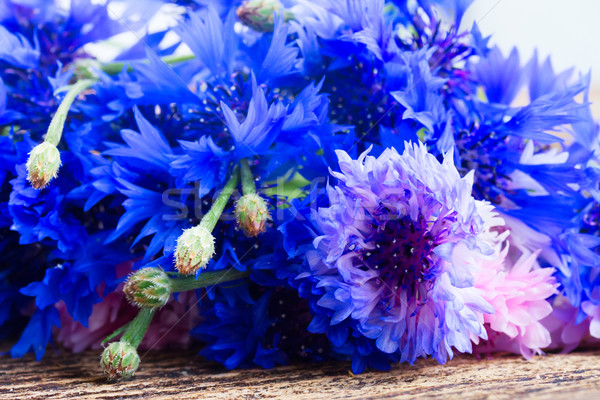 Stock photo: Blue cornflowers close up